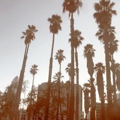 fall palms
